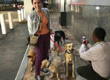 Conoce a la organización mexicana que busca  nuevos hogares en Canadá para perritos callejeros